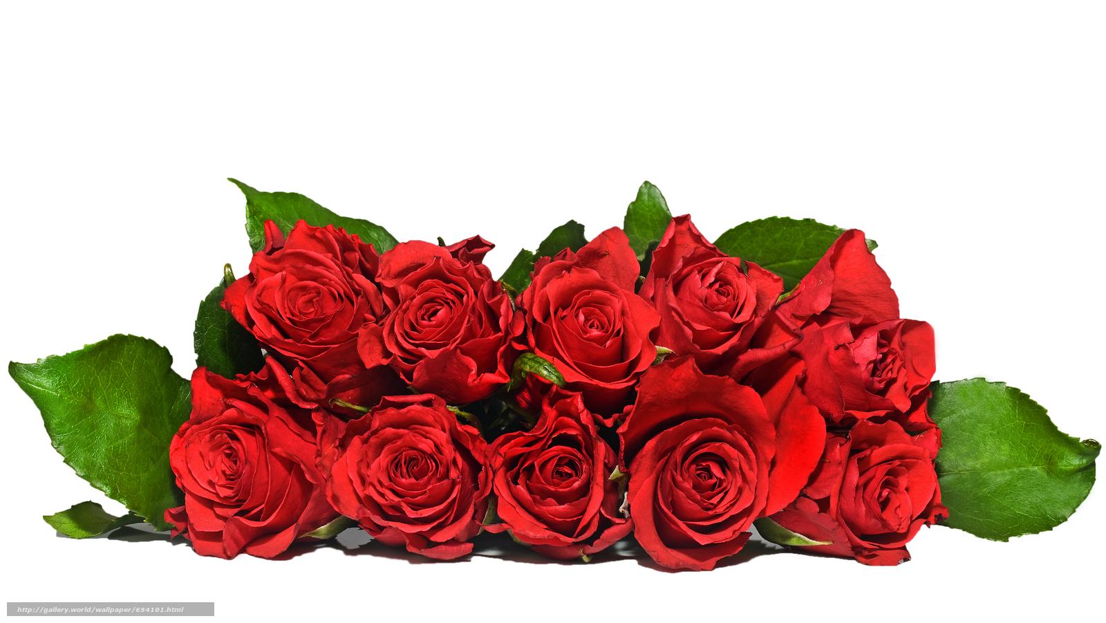 scaricare gli sfondi rosa,  Roses,  fiore,  Fiori Sfondi gratis per la risoluzione del desktop 7670x4317 — immagine №654101