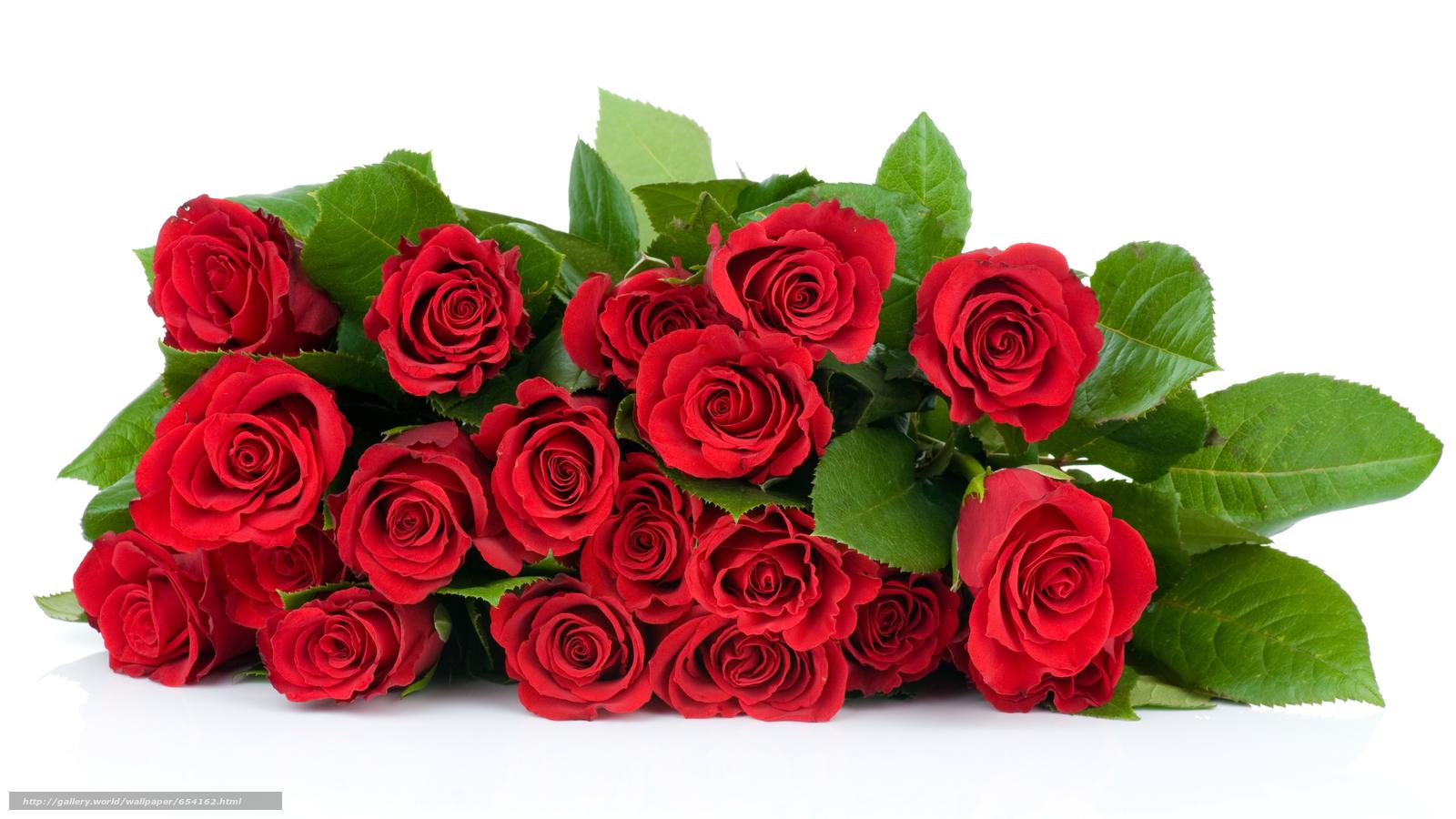 Скачать обои роза,  розы,  цветок,  цветы бесплатно для рабочего стола в разрешении 4074x2292 — картинка №654162