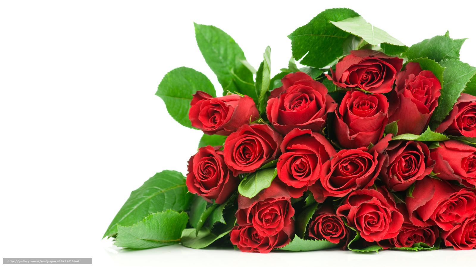 Скачать обои роза,  розы,  цветок,  цветы бесплатно для рабочего стола в разрешении 8576x4824 — картинка №654197