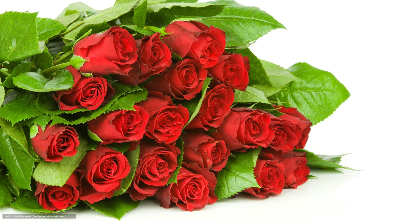Скачать обои роза,  розы,  цветок,  цветы бесплатно для рабочего стола в разрешении 8576x4824 — картинка №654207