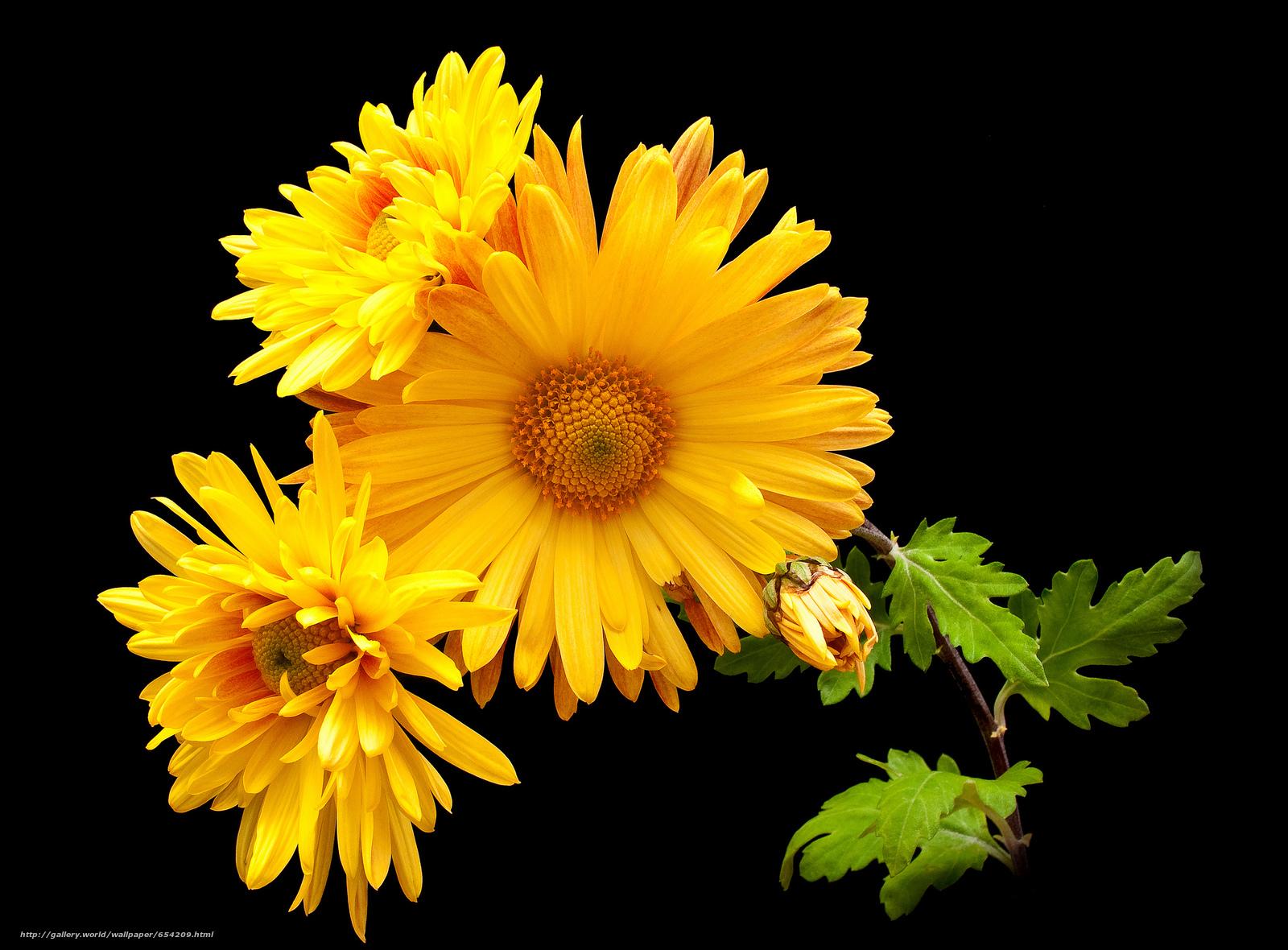 Descargar gratis Flores,  flor,  Macro,  hermosa flor Fondos de escritorio en la resolucin 2048x1511 — imagen №654209