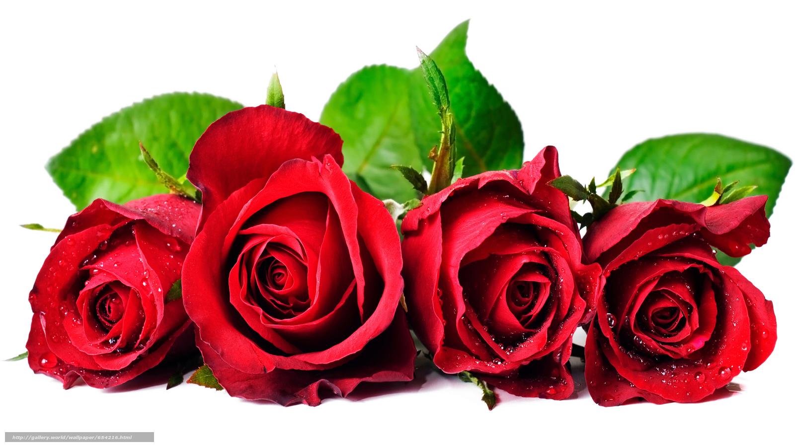 下载壁纸 玫瑰,  玫瑰,  花,  花卉 免费为您的桌面分辨率的壁纸 5234x2944 — 图片 №654216