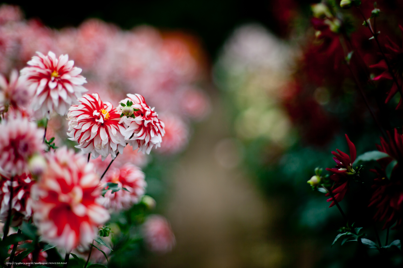 Descargar gratis Flores,  flor,  Macro,  hermosa flor Fondos de escritorio en la resolucin 3861x2574 — imagen №654220