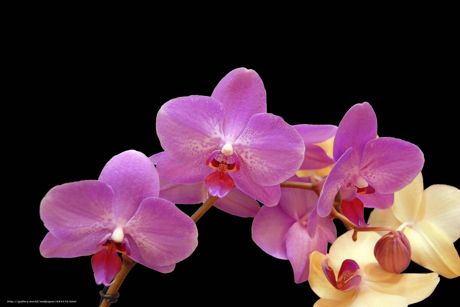 Descargar gratis orquídea,  flor,  flora Fondos de escritorio en la resolucin 3872x2592 — imagen №654370
