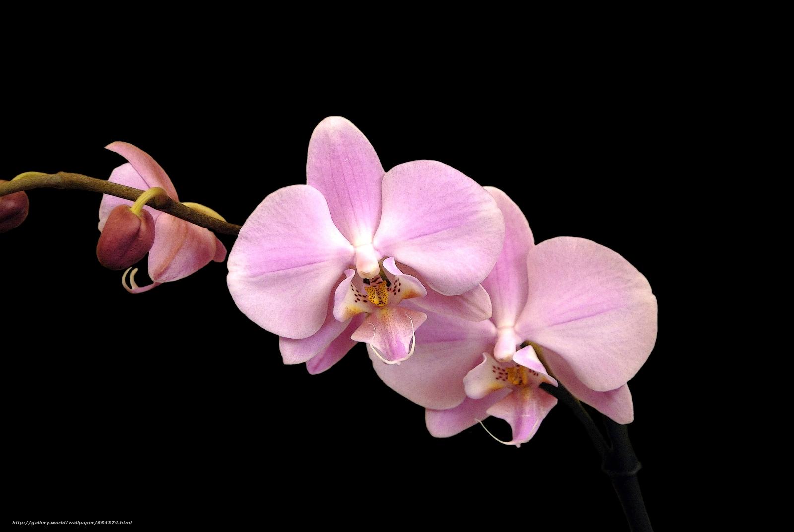 Скачать обои орхидея,  цветок,  флора бесплатно для рабочего стола в разрешении 3872x2592 — картинка №654374