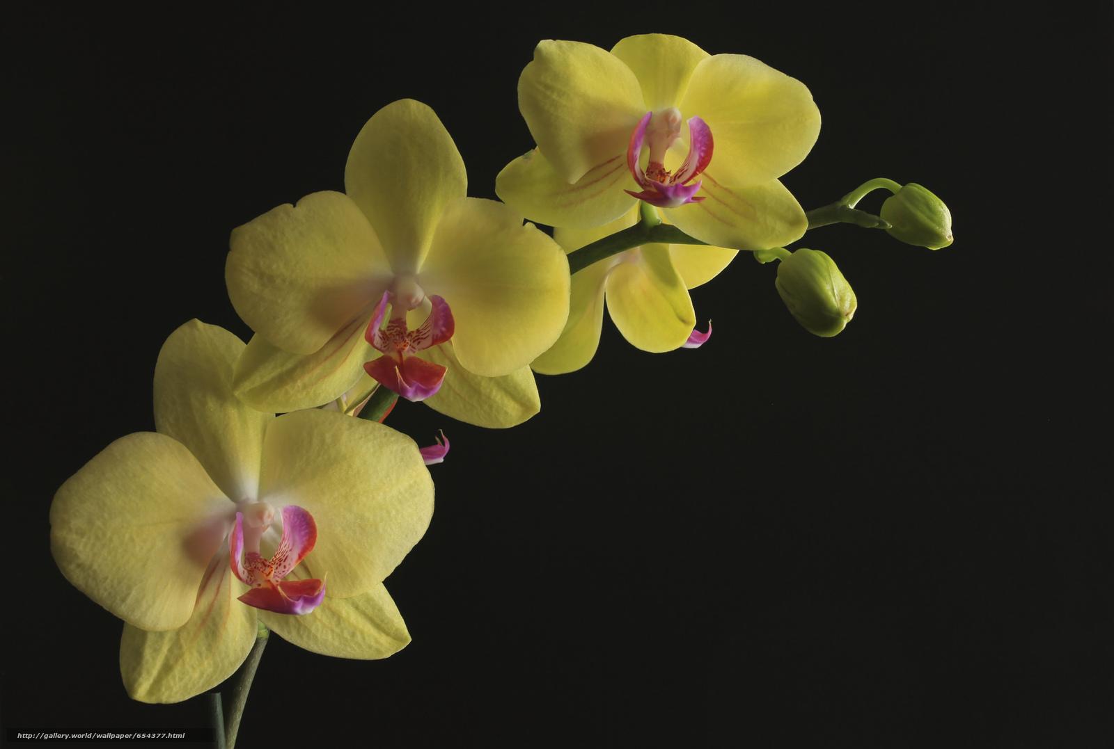Скачать обои орхидея,  цветок,  флора бесплатно для рабочего стола в разрешении 2048x1378 — картинка №654377