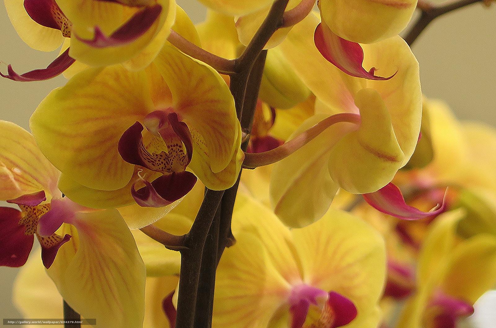 Descargar gratis orquídea,  flor,  flora Fondos de escritorio en la resolucin 2048x1354 — imagen №654379