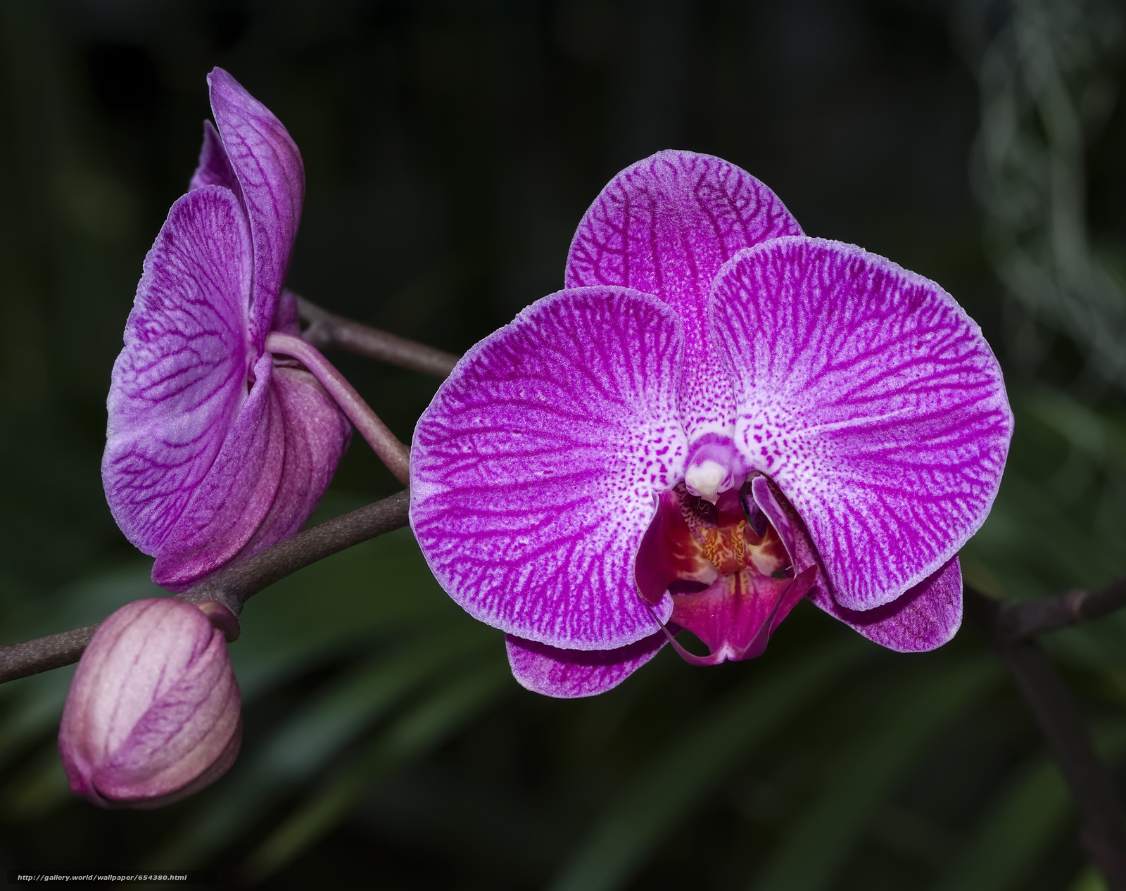 Download wallpaper orchid,  flower,  flora free desktop wallpaper in the resolution 2048x1621 — picture №654380
