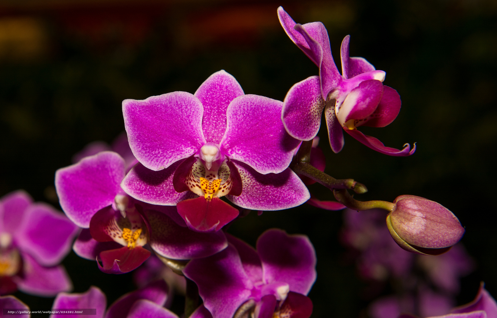 Download wallpaper orchid,  flower,  flora free desktop wallpaper in the resolution 2048x1309 — picture №654381