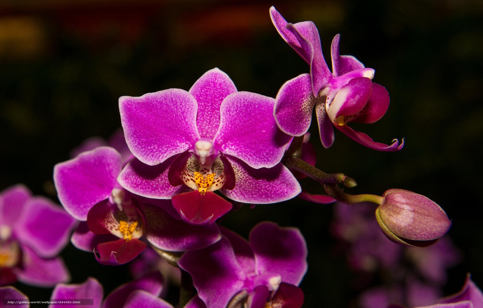 Скачать обои орхидея,  цветок,  флора бесплатно для рабочего стола в разрешении 2048x1309 — картинка №654381