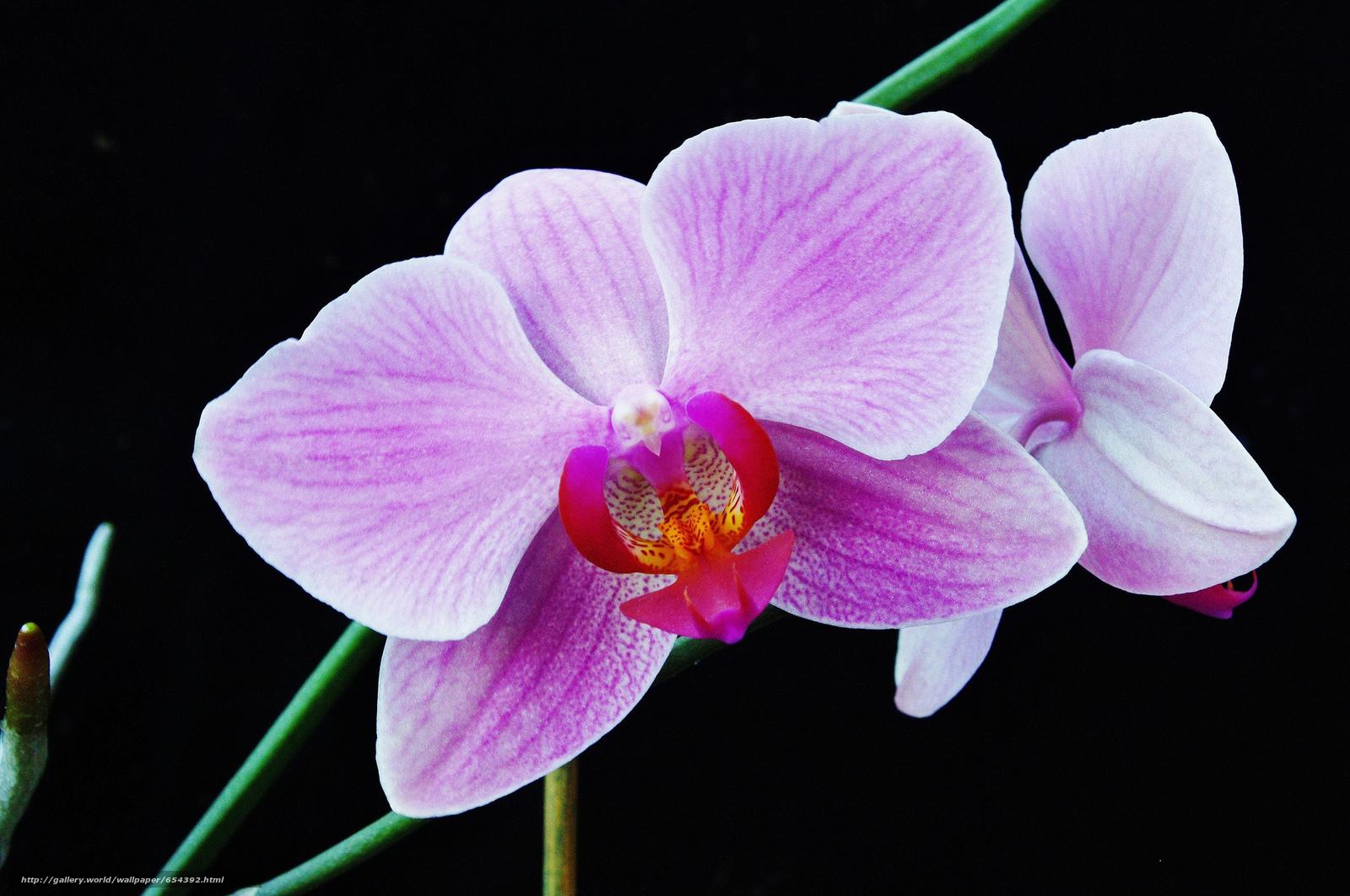 Скачать обои орхидея,  цветок,  флора бесплатно для рабочего стола в разрешении 2048x1360 — картинка №654392