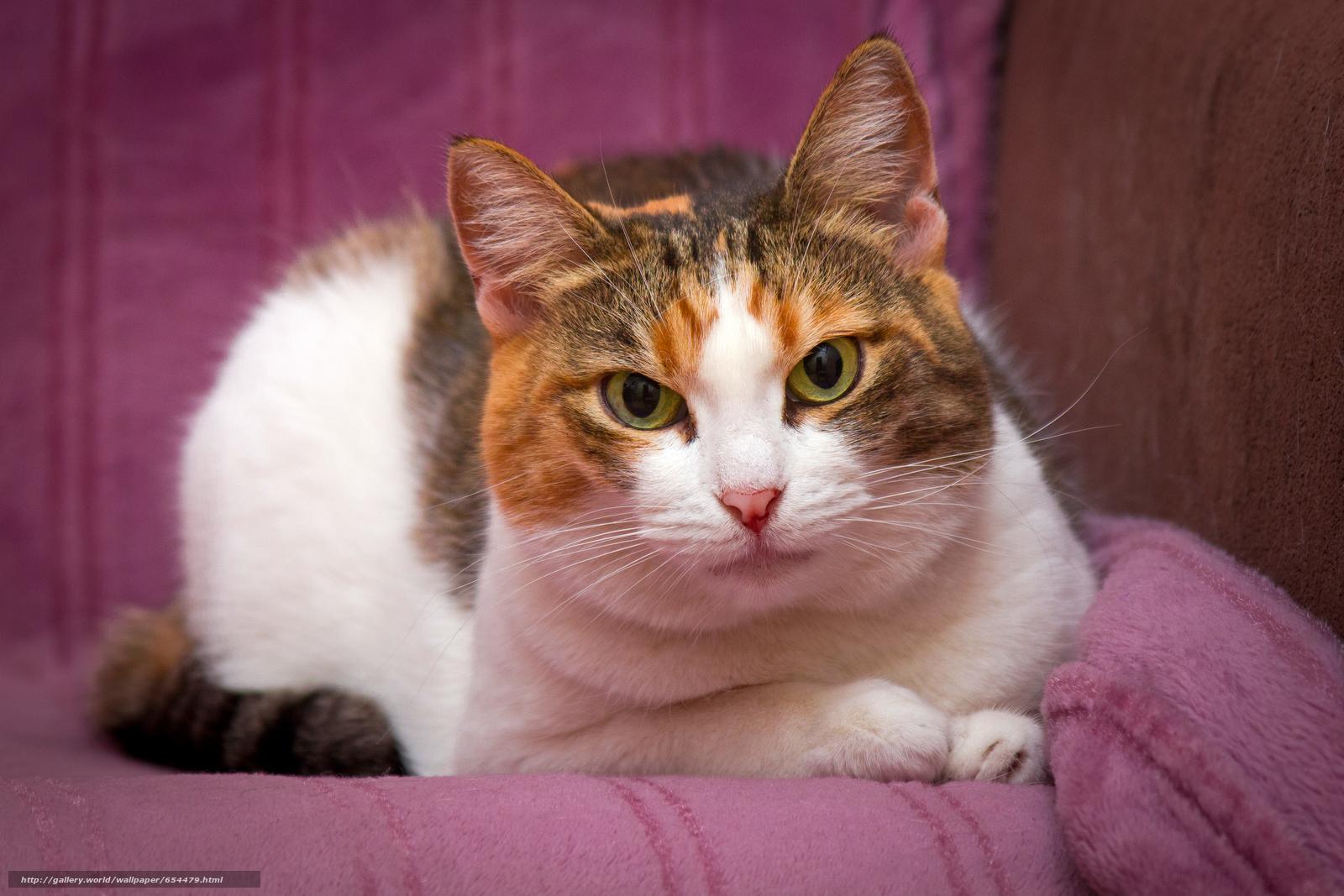 Скачать обои кот,  кошка,  кошки,  фотосессия бесплатно для рабочего стола в разрешении 4728x3152 — картинка №654479