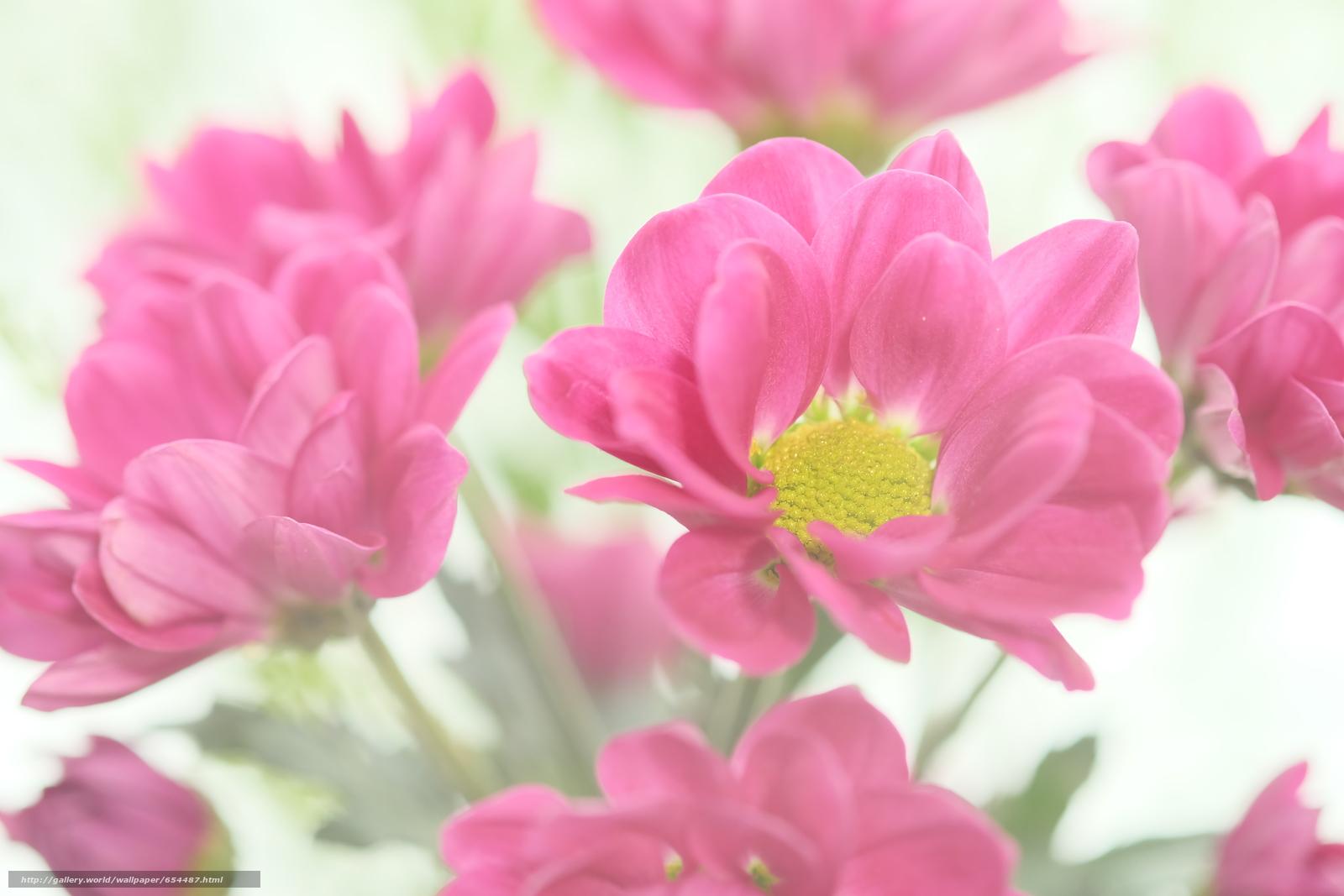Download wallpaper flower,  Flowers,  flora,  Macro free desktop wallpaper in the resolution 4896x3264 — picture №654487