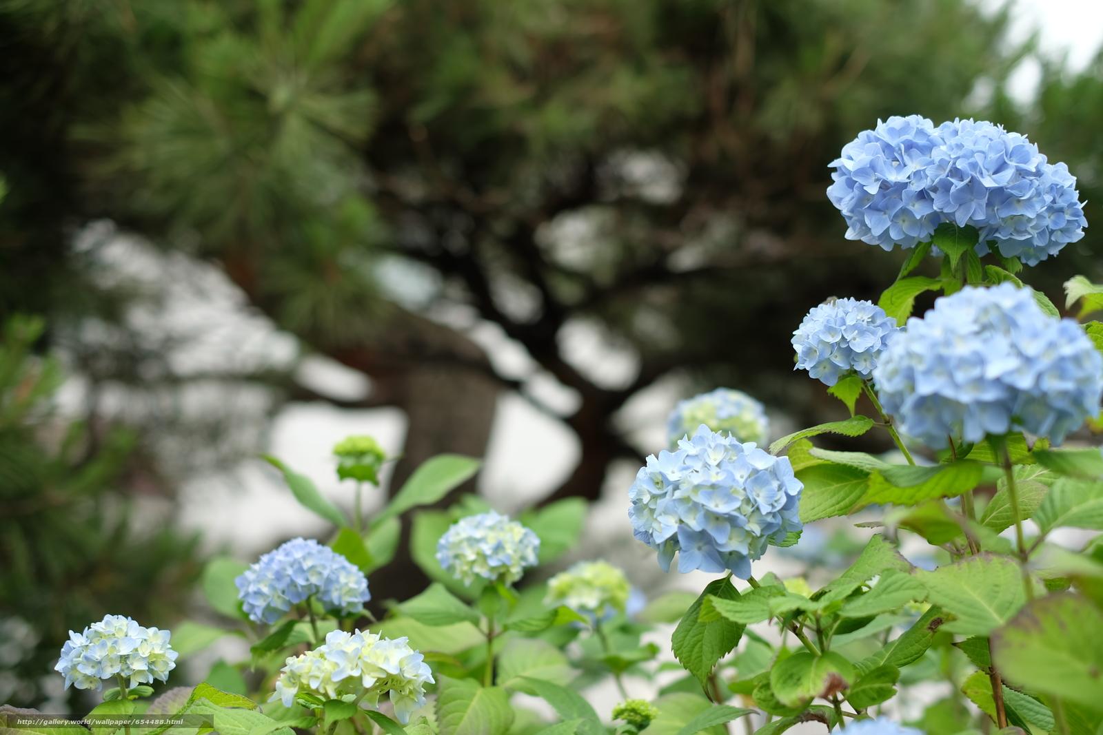Download wallpaper flower,  Flowers,  flora,  Macro free desktop wallpaper in the resolution 4896x3264 — picture №654488