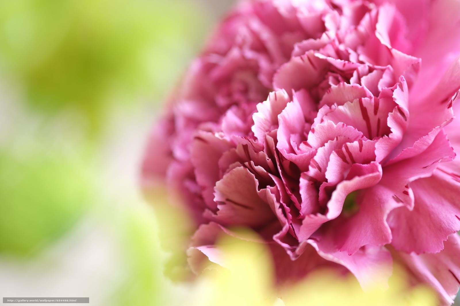 下载壁纸 花,  花卉,  植物群,  宏 免费为您的桌面分辨率的壁纸 4896x3264 — 图片 №654498