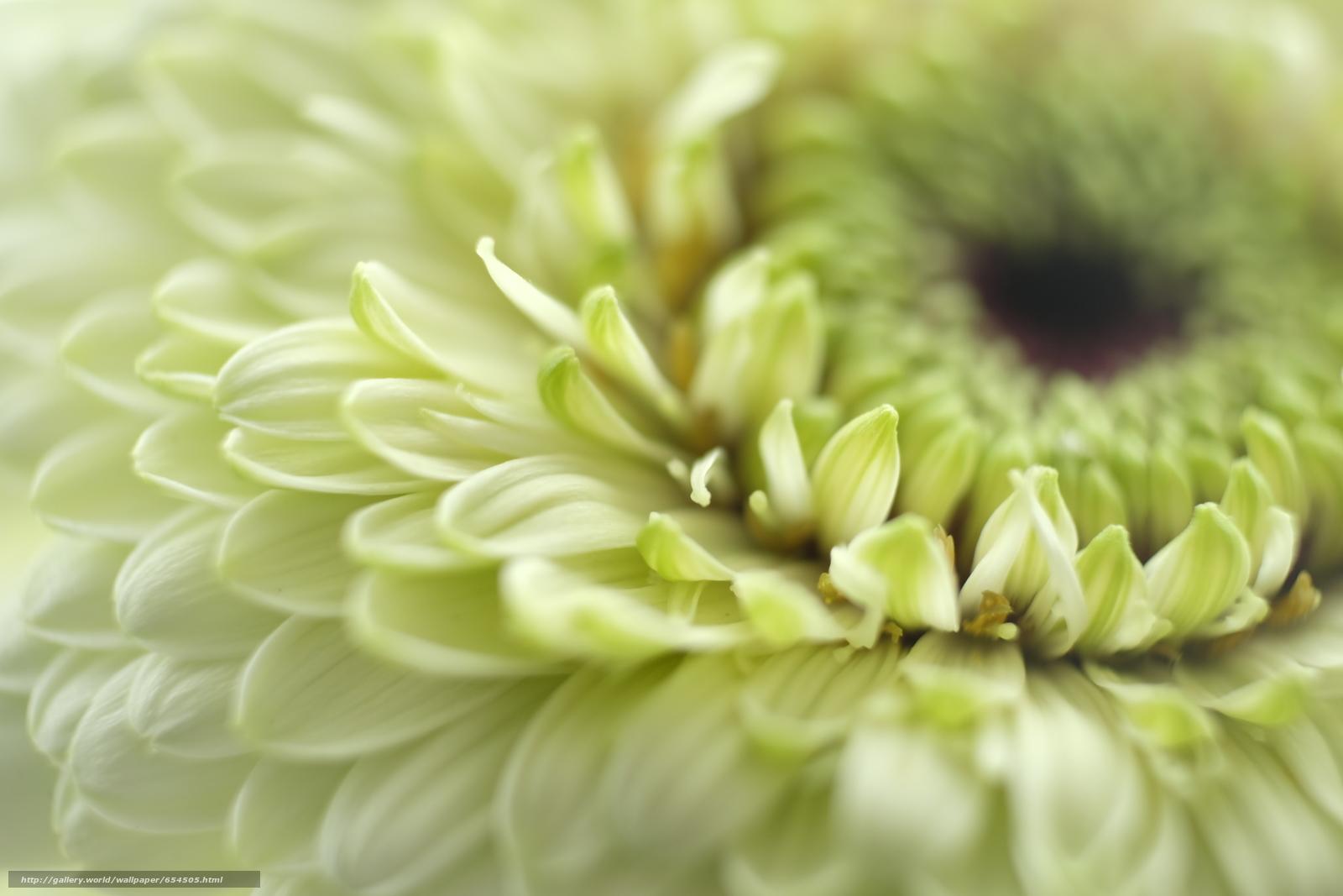 Скачать обои цветок,  цветы,  флора,  макро бесплатно для рабочего стола в разрешении 4896x3264 — картинка №654505