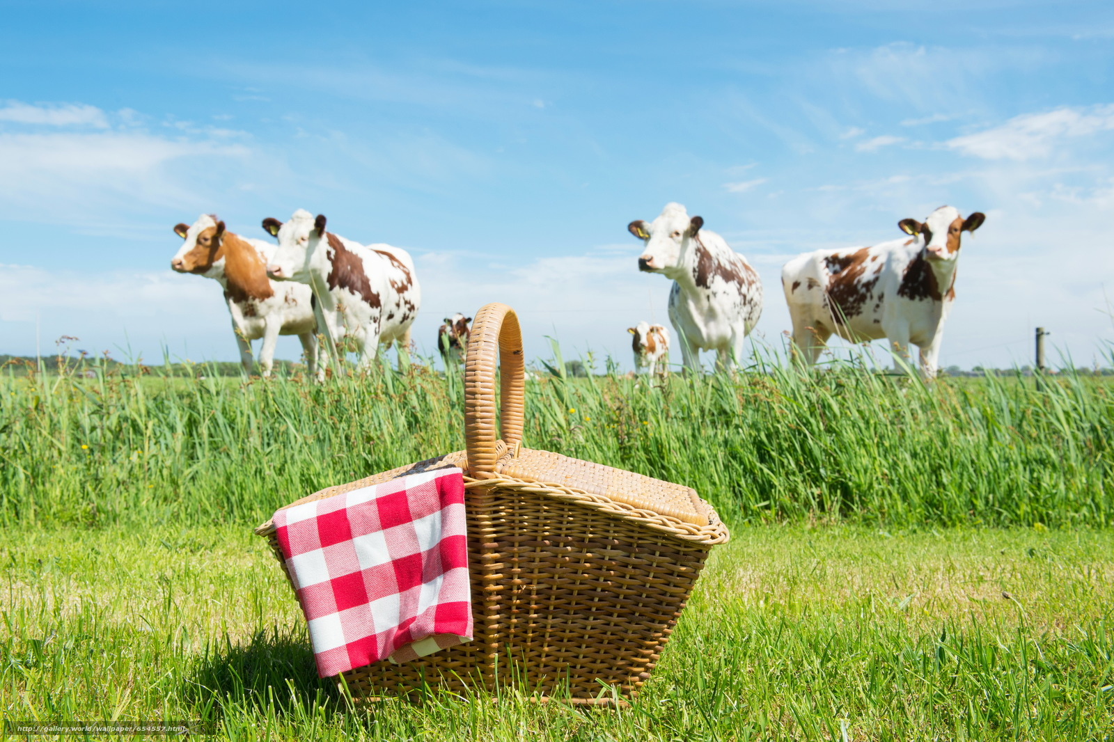 Download wallpaper cow,  COW,  bulls,  nature free desktop wallpaper in the resolution 6000x3999 — picture №654557