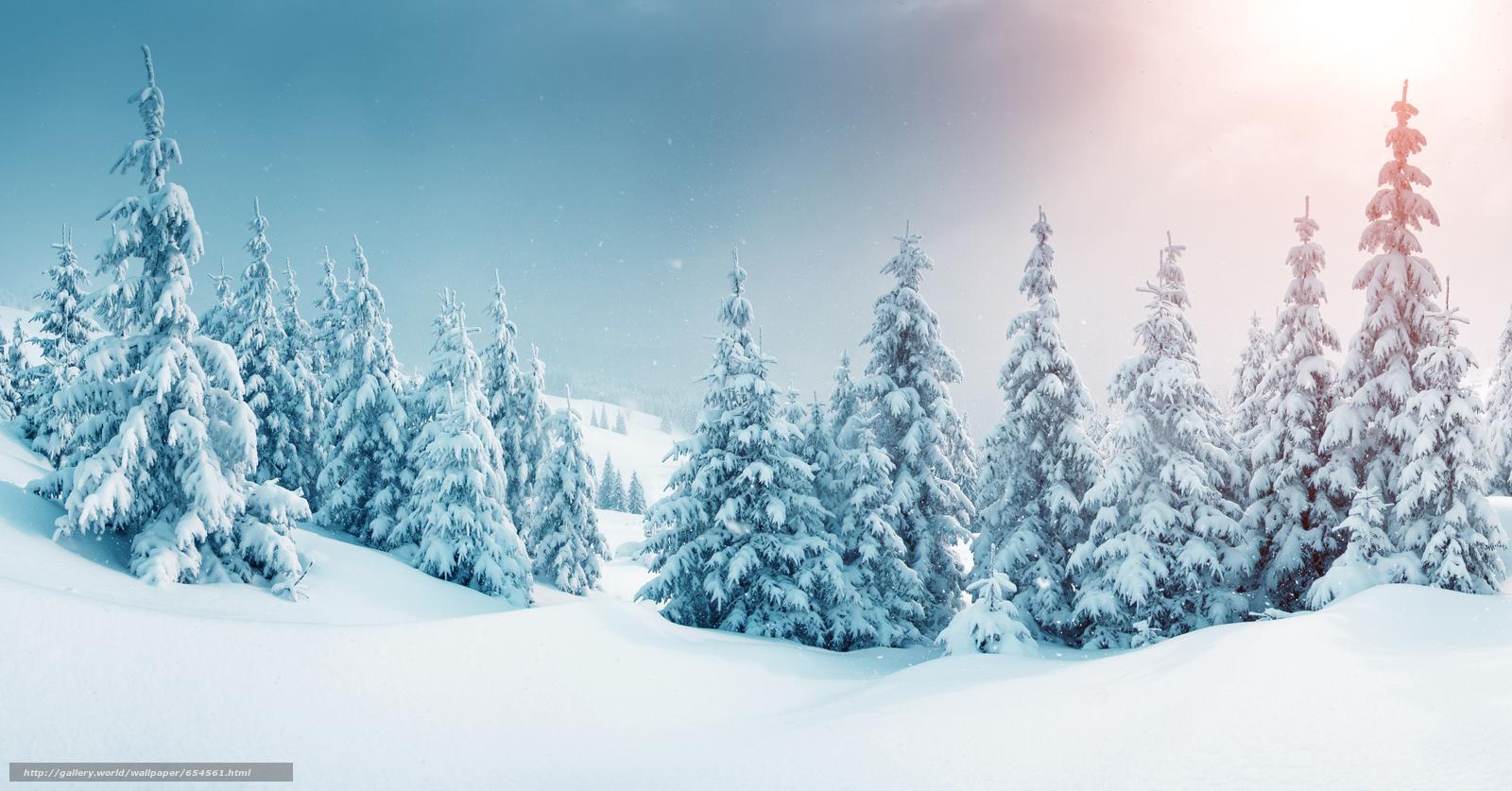 scaricare gli sfondi inverno,  nevicata,  derive,  abete rosso Sfondi gratis per la risoluzione del desktop 6785x3551 — immagine №654561