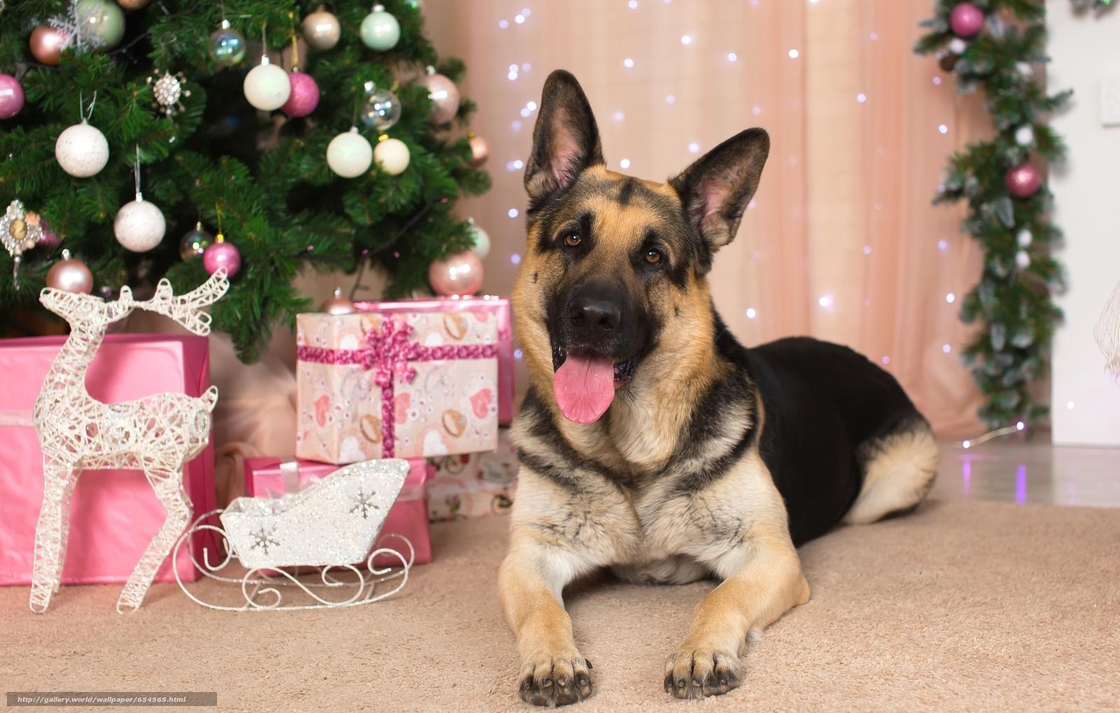 Download wallpaper German shepherd,  dog,  fir-tree,  gifts free desktop wallpaper in the resolution 2400x1528 — picture №654565