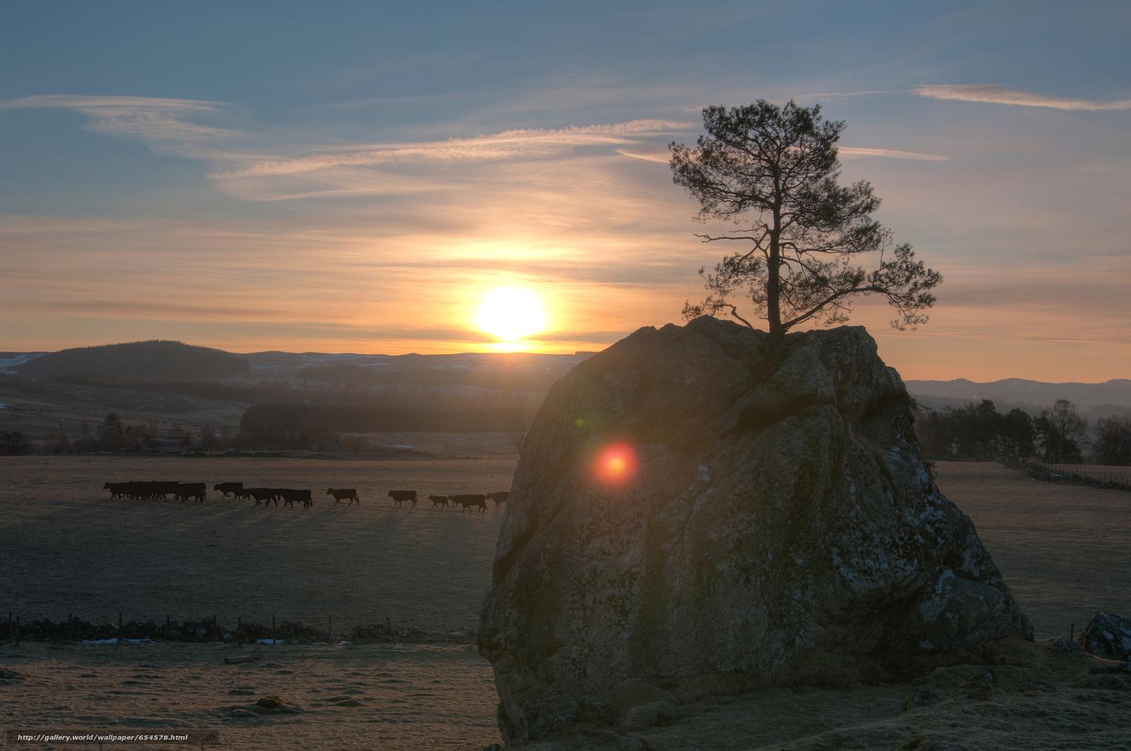 scaricare gli sfondi mucca,  COW,  tori,  natura Sfondi gratis per la risoluzione del desktop 4672x3104 — immagine №654578