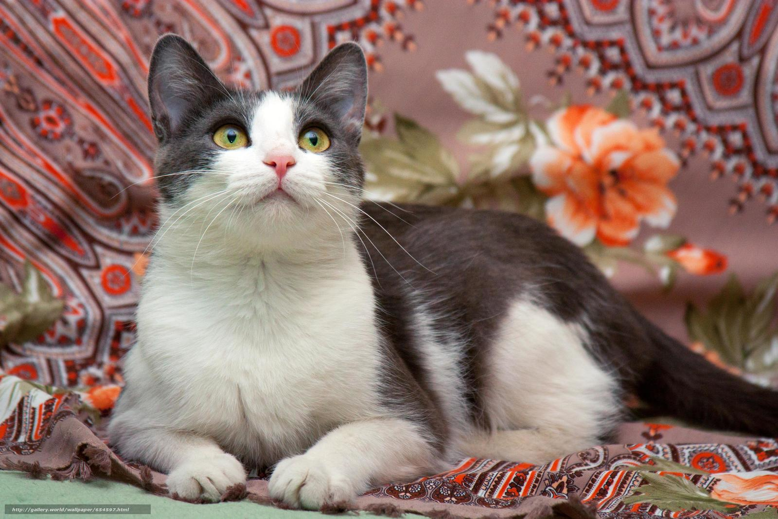 Скачать обои Кот,  кошка,  кошки,  фотосессия бесплатно для рабочего стола в разрешении 4272x2848 — картинка №654597