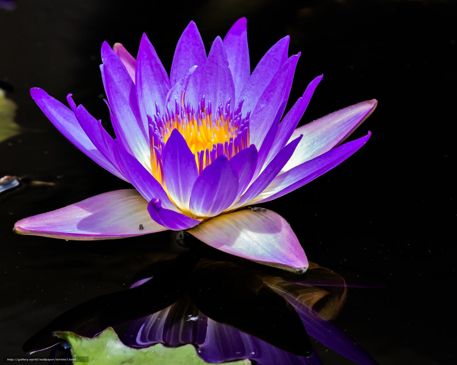 Скачать обои водяная лилия,  водяные лилии,  цветы,  флора бесплатно для рабочего стола в разрешении 3582x2866 — картинка №654867