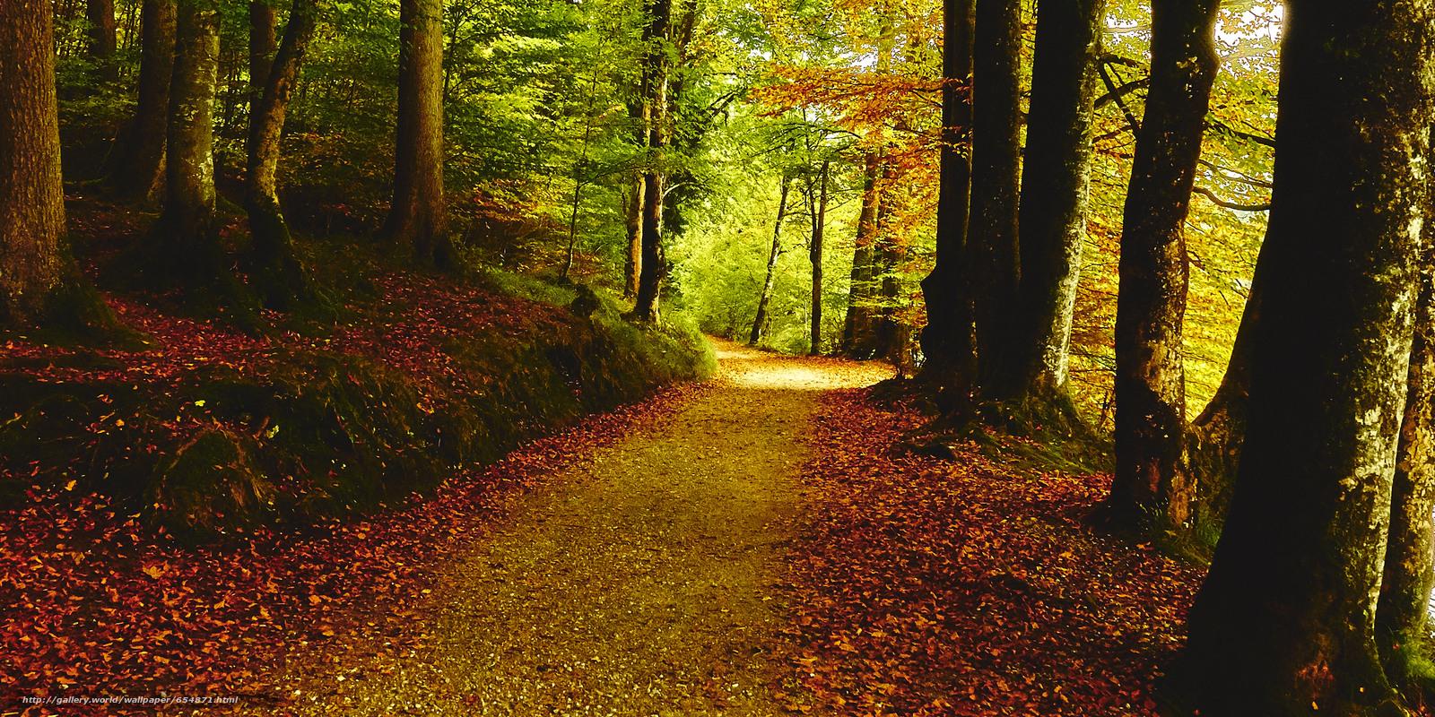 scaricare gli sfondi autunno,  foresta,  alberi,  stradale Sfondi gratis per la risoluzione del desktop 3658x1829 — immagine №654871