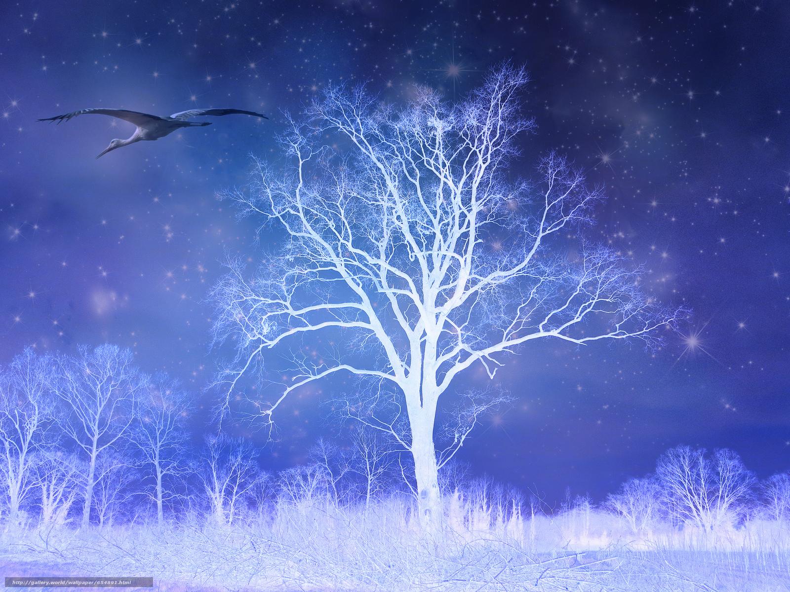 Скачать обои ночь,  сияние,  деревья,  аист бесплатно для рабочего стола в разрешении 2048x1536 — картинка №654891