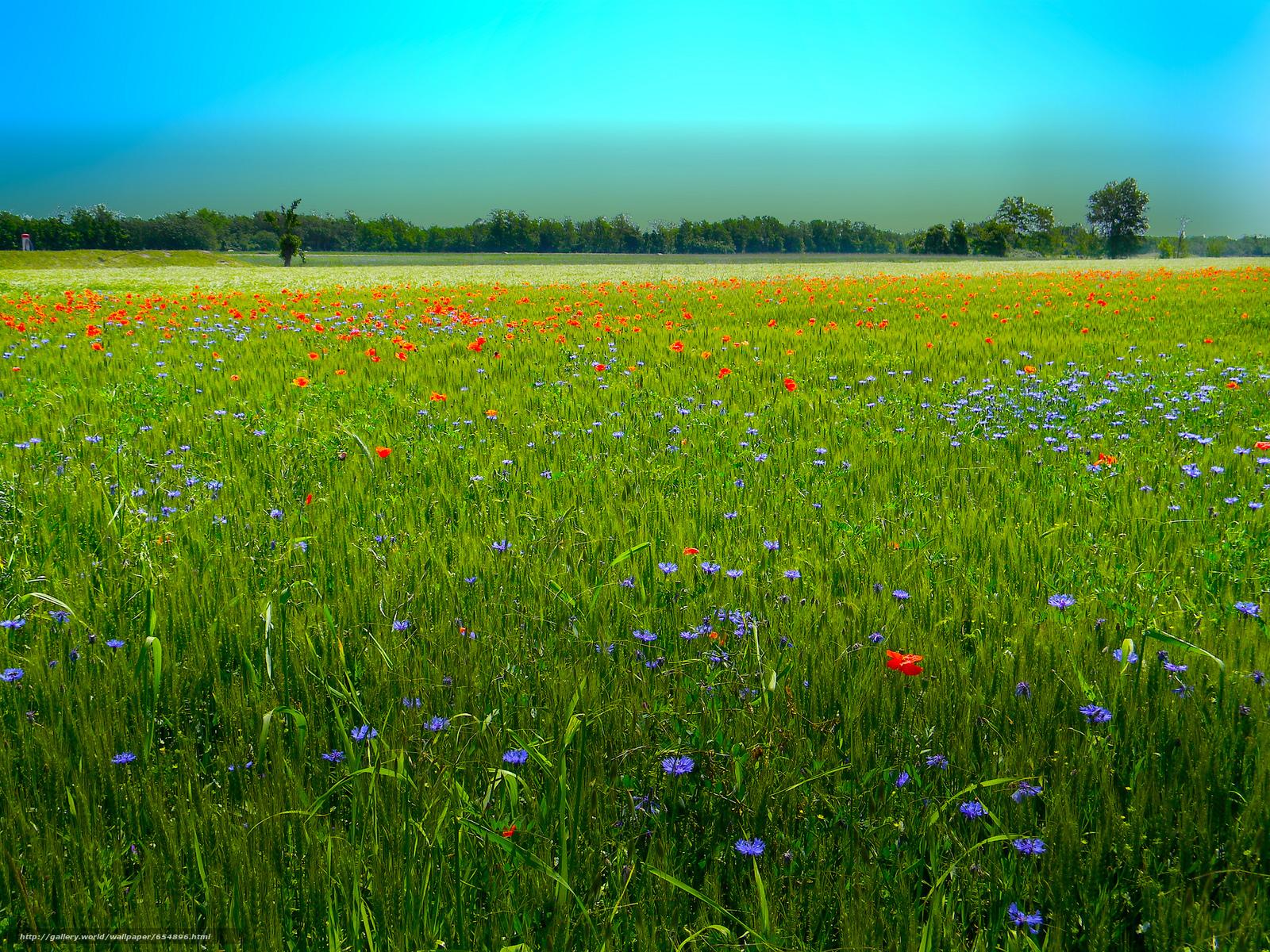scaricare gli sfondi tramonto,  campo,  Fiori,  paesaggio Sfondi gratis per la risoluzione del desktop 2048x1536 — immagine №654896