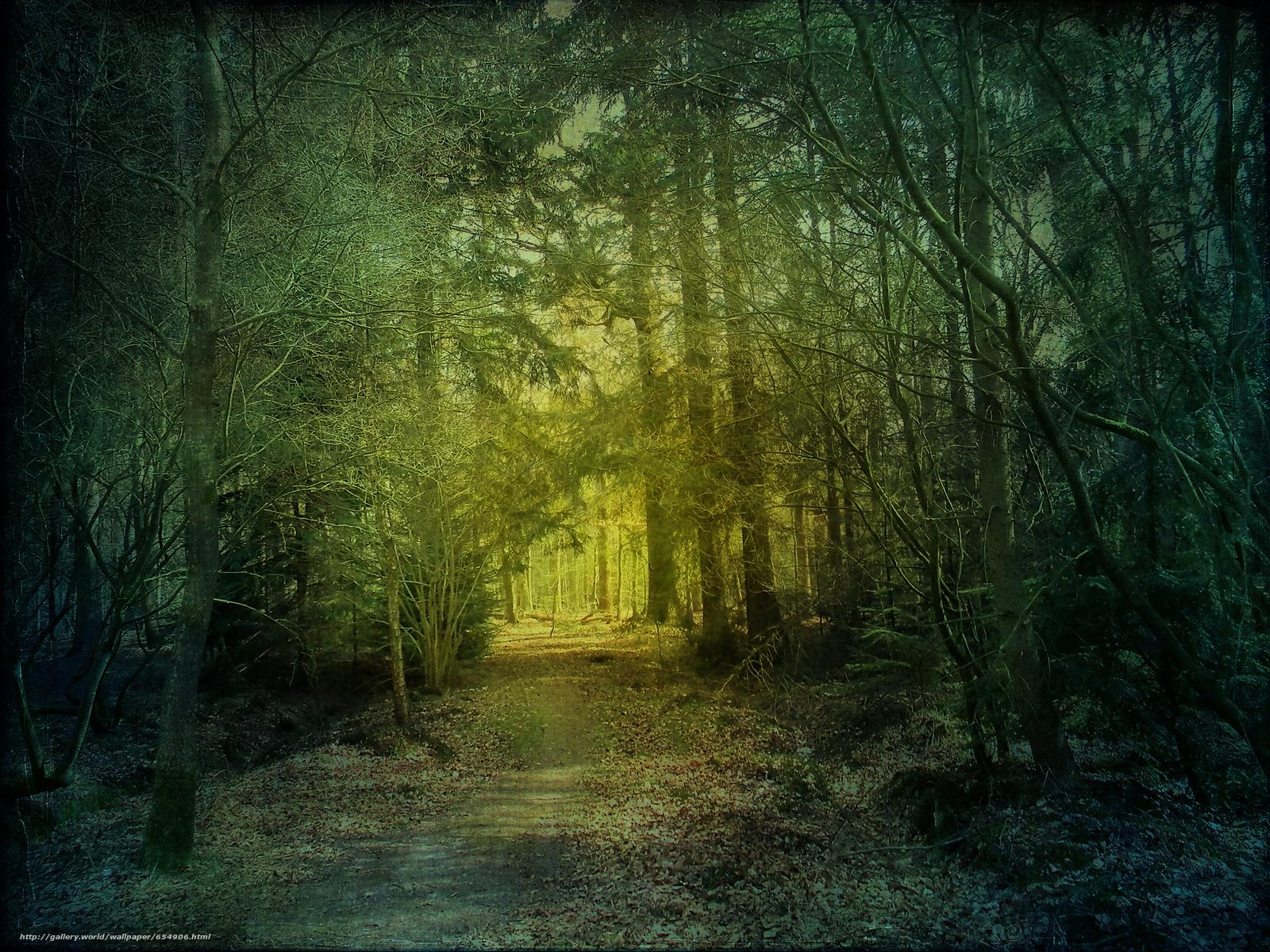 Скачать обои лес,  деревья,  дорога,  природа бесплатно для рабочего стола в разрешении 2048x1536 — картинка №654906
