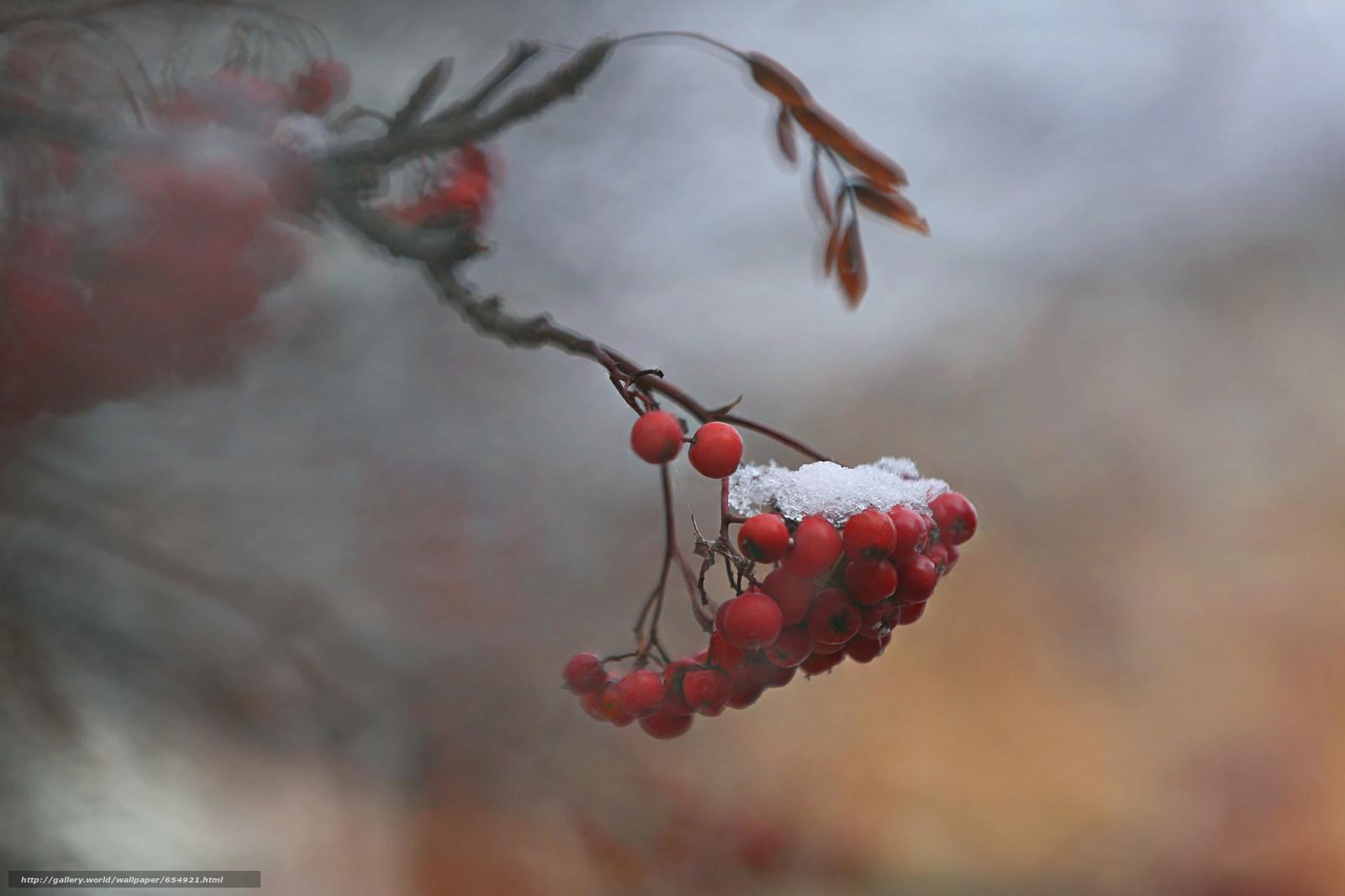 scaricare gli sfondi BERRY,  frutta,  FILIALE,  nevicata Sfondi gratis per la risoluzione del desktop 2048x1365 — immagine №654921
