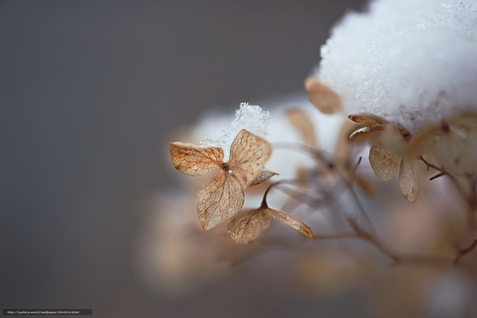 Download wallpaper leaves,  withered,  snow,  winter free desktop wallpaper in the resolution 2048x1365 — picture №654924