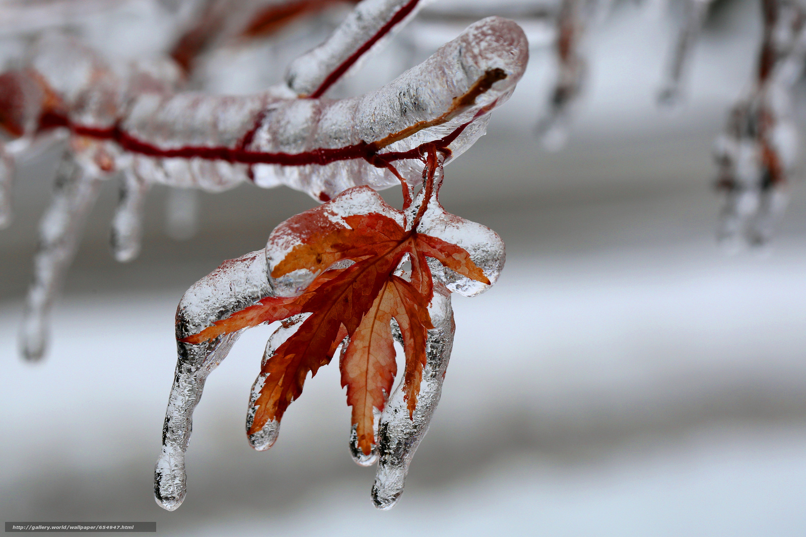 Download wallpaper branch,  leaves,  glaciation,  ice free desktop wallpaper in the resolution 2048x1365 — picture №654947
