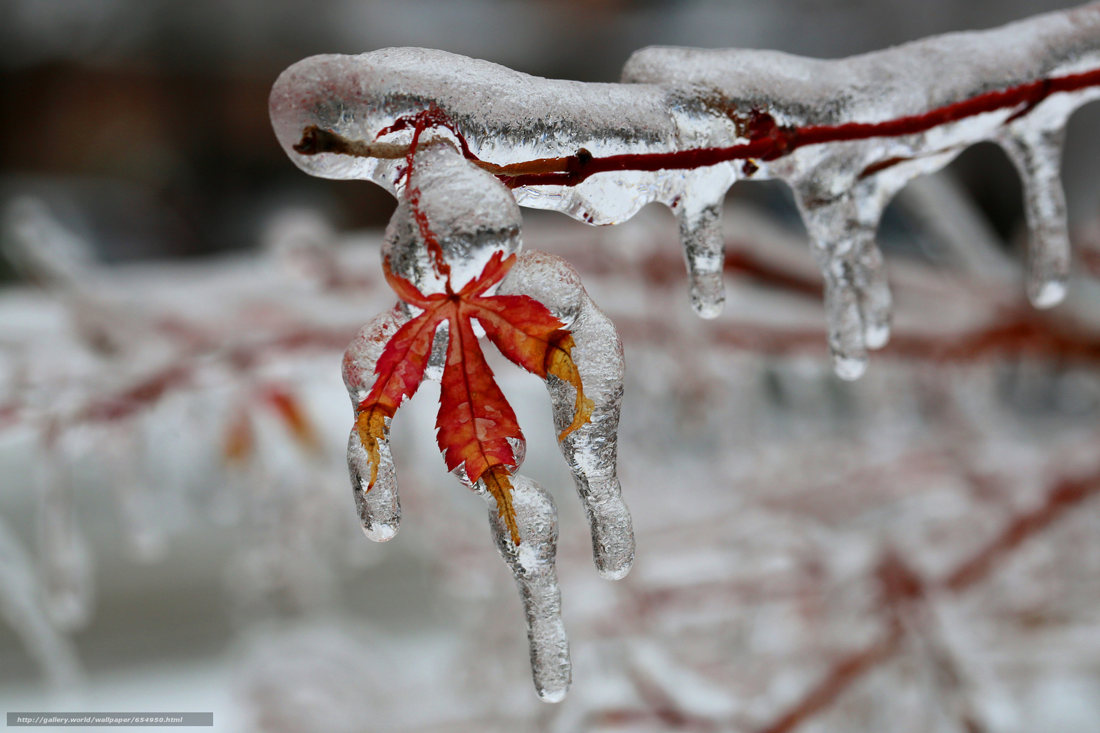 Download wallpaper branch,  sheet,  glaciation,  Icicles free desktop wallpaper in the resolution 2048x1365 — picture №654950