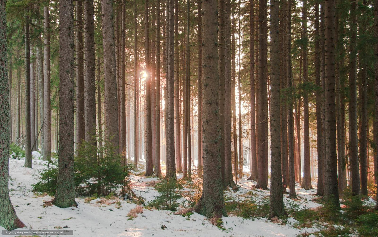 Скачать обои Лес,  деревья,  природа,  зима бесплатно для рабочего стола в разрешении 4178x2620 — картинка №655026