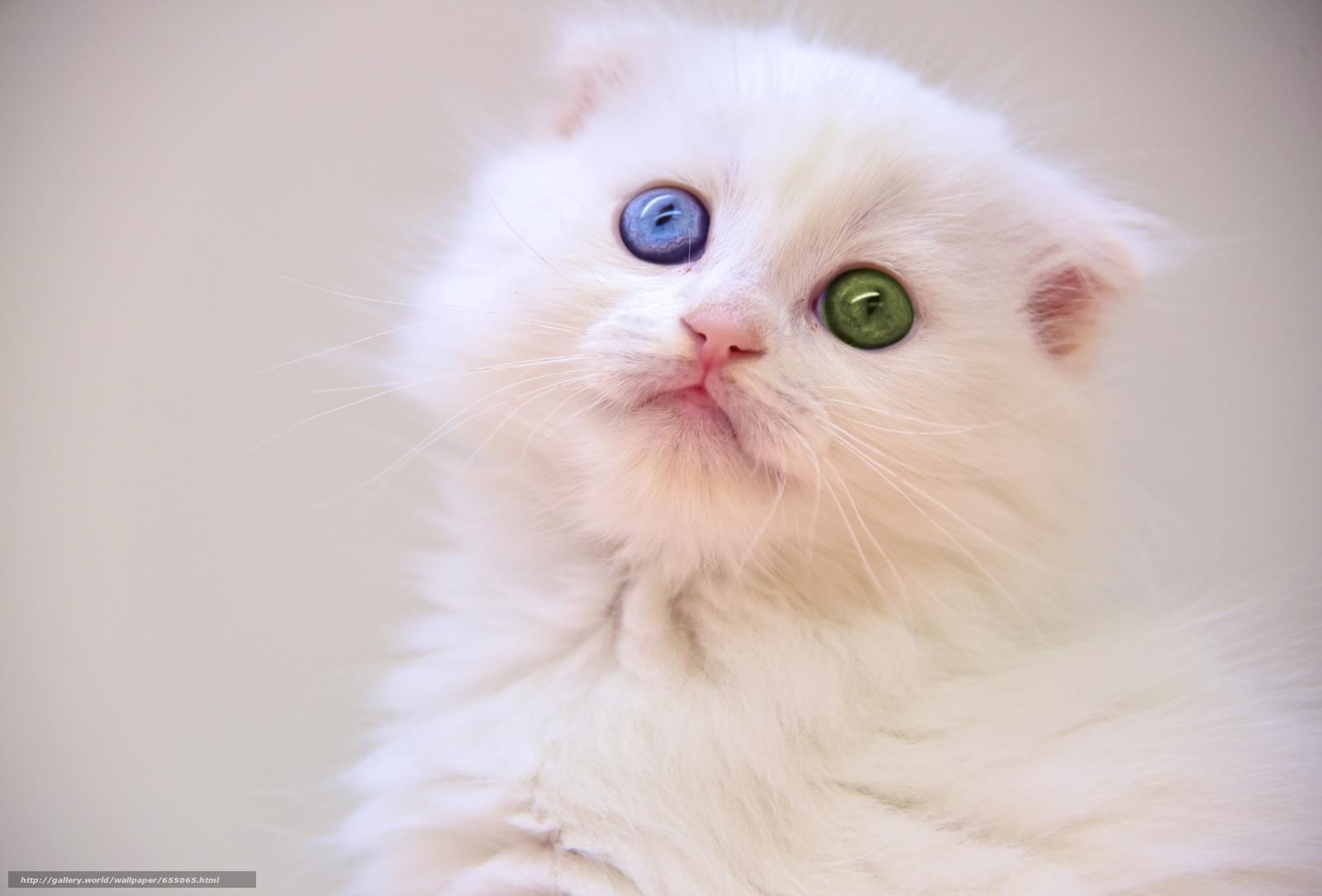 scaricare gli sfondi gattino bianco,  gattino,  occhi Sfondi gratis per la risoluzione del desktop 3456x2343 — immagine №655065