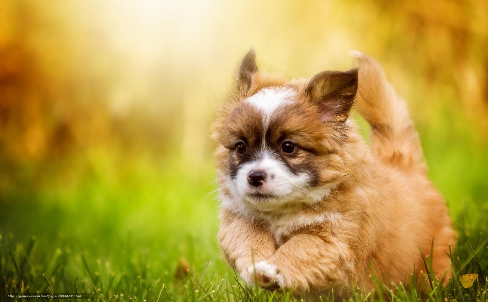 Скачать обои собака,  щенок,  прогулка бесплатно для рабочего стола в разрешении 2048x1266 — картинка №655067