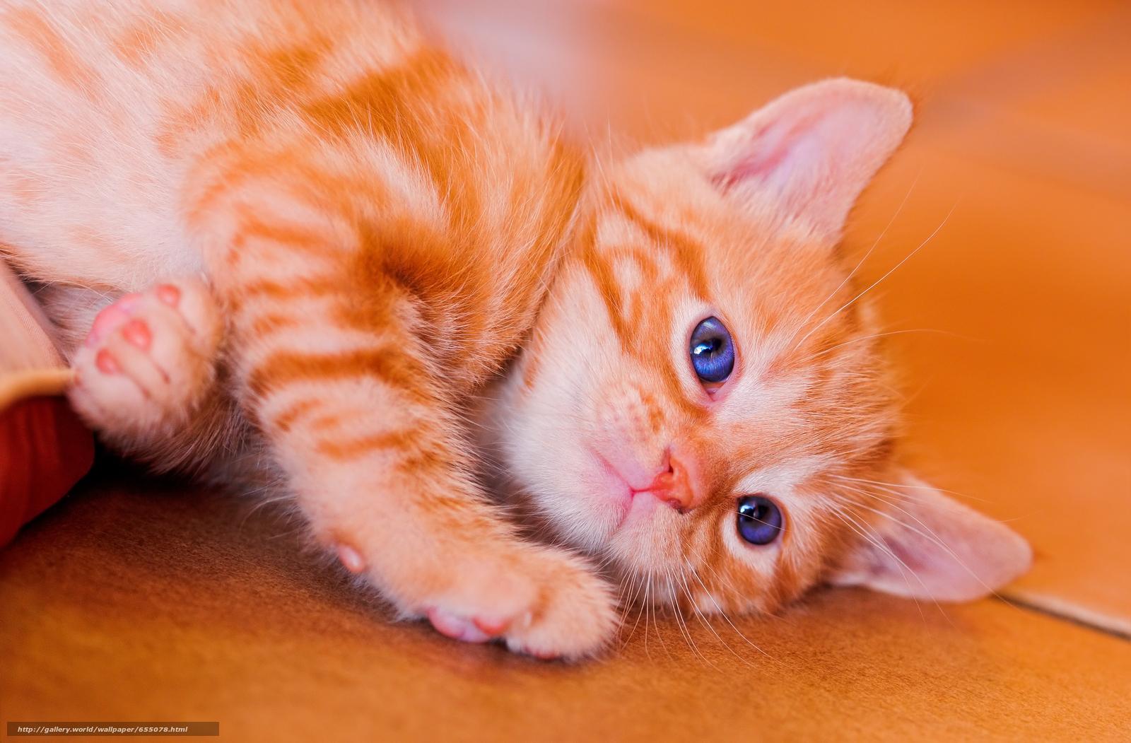 scaricare gli sfondi COTE,  gatto,  gatto,  Gattini Sfondi gratis per la risoluzione del desktop 3540x2325 — immagine №655078