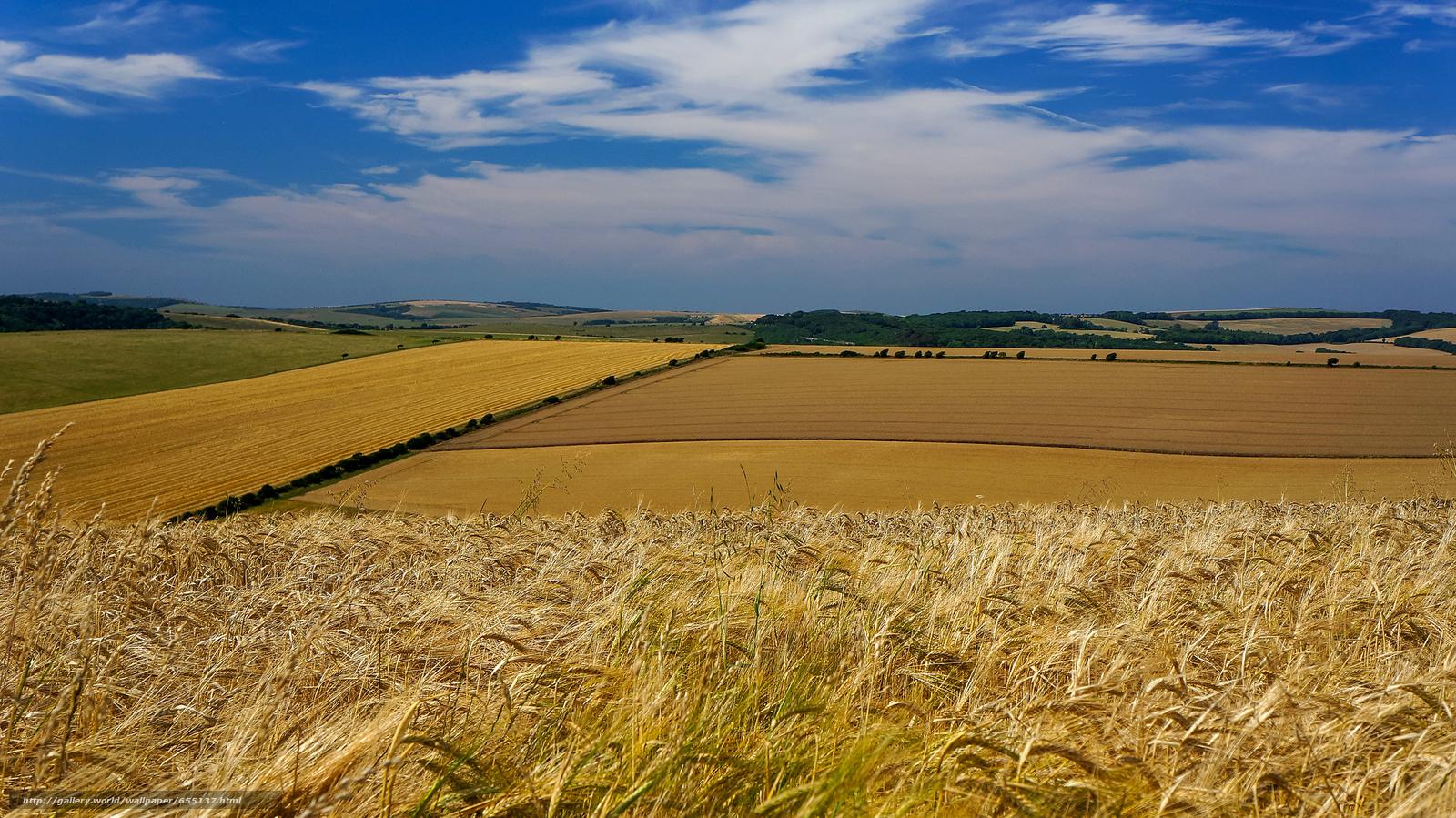Descargar gratis campo,  mazorcas de maíz,  paisaje Fondos de escritorio en la resolucin 2048x1151 — imagen №655137