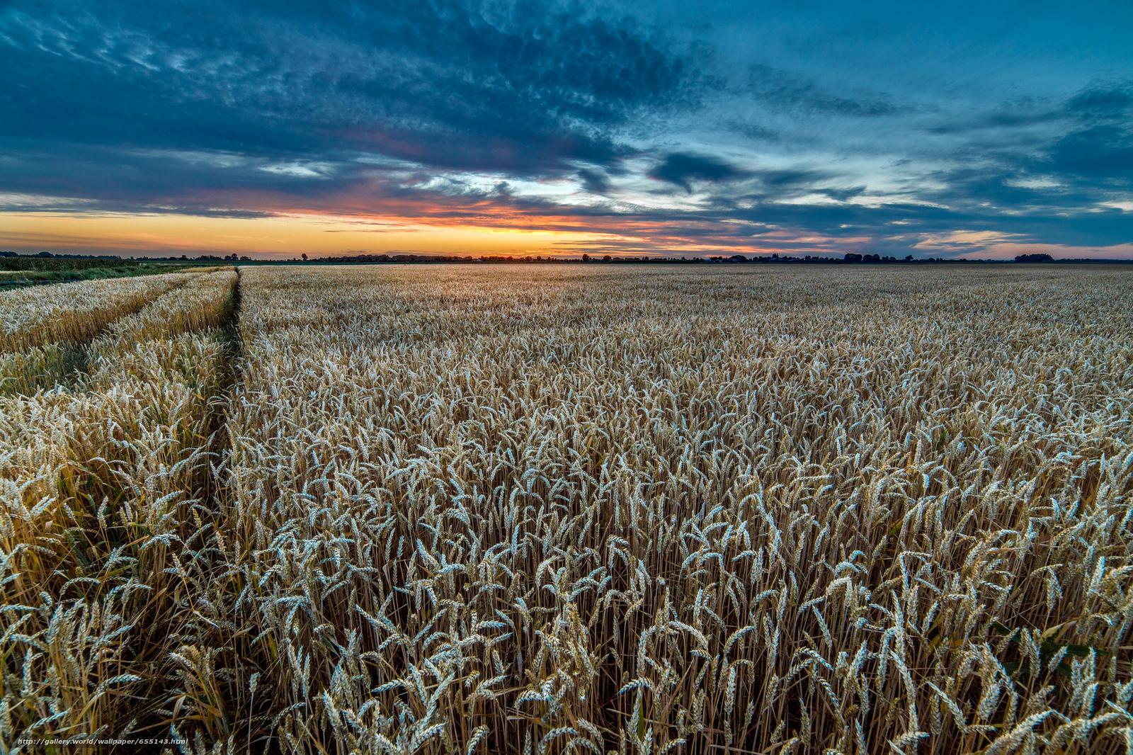 scaricare gli sfondi tramonto,  campo,  spighe di grano,  paesaggio Sfondi gratis per la risoluzione del desktop 2048x1365 — immagine №655143