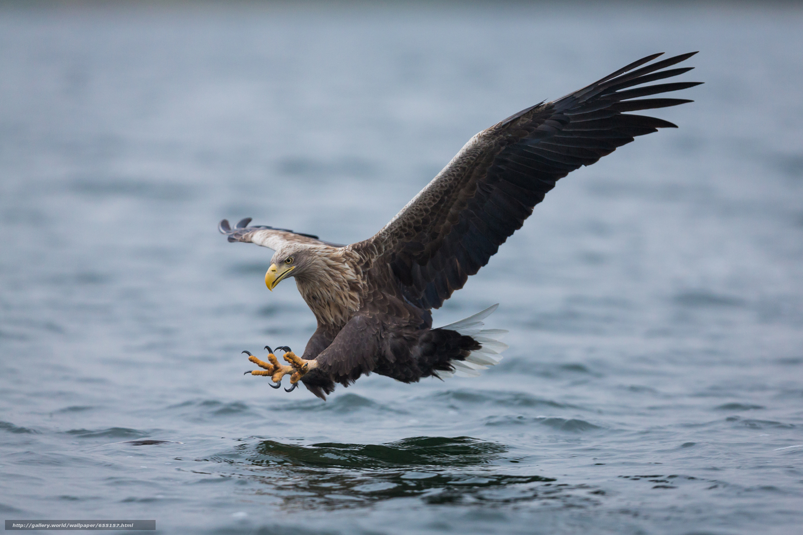 Скачать обои орёл,  хищник,  птица бесплатно для рабочего стола в разрешении 1980x1320 — картинка №655157