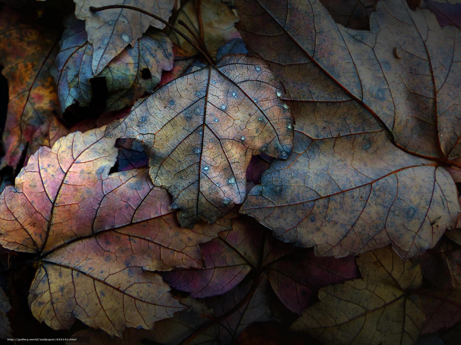 Скачать обои осень,  листья,  природа бесплатно для рабочего стола в разрешении 2048x1536 — картинка №655192