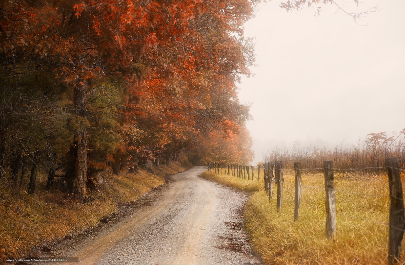 scaricare gli sfondi autunno,  stradale,  foresta,  campo Sfondi gratis per la risoluzione del desktop 2048x1343 — immagine №655196