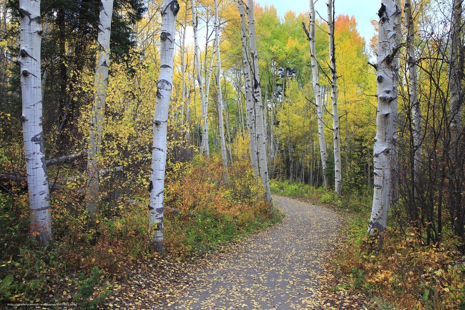 scaricare gli sfondi autunno,  stradale,  foresta,  alberi Sfondi gratis per la risoluzione del desktop 2048x1365 — immagine №655201