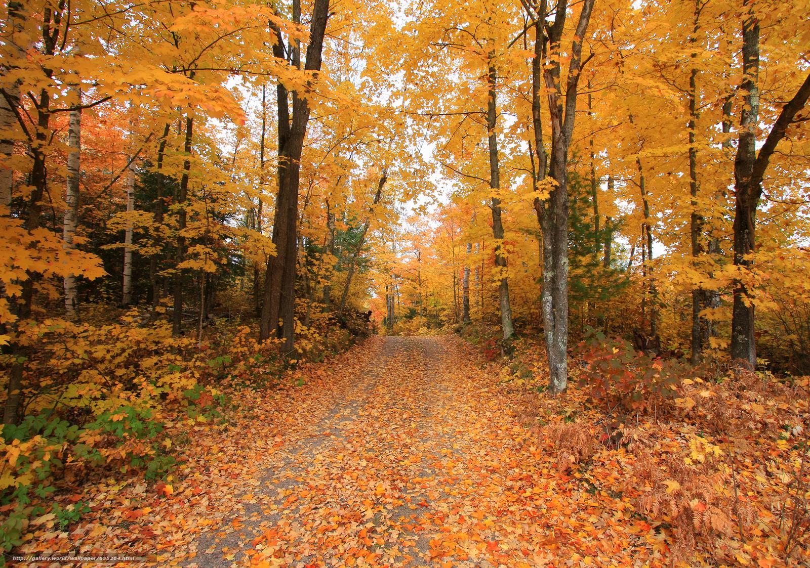 壁紙をダウンロード 秋,  道路,  森,  木 デスクトップの解像度のための無料壁紙 2048x1438 — 絵 №655204