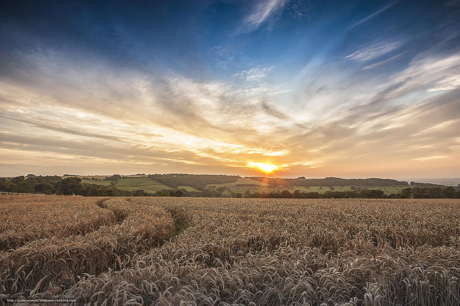 scaricare gli sfondi tramonto,  campo,  spighe di grano,  paesaggio Sfondi gratis per la risoluzione del desktop 2048x1365 — immagine №655208