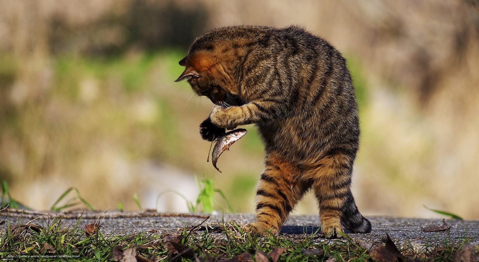 scaricare gli sfondi COTE,  gatto,  piccoli pesci Sfondi gratis per la risoluzione del desktop 2048x1119 — immagine №655296