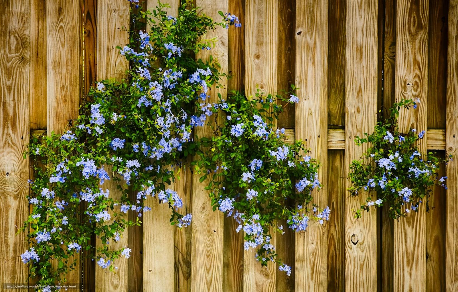 Скачать обои цветы,  голубые,  забор бесплатно для рабочего стола в разрешении 2048x1304 — картинка №655305