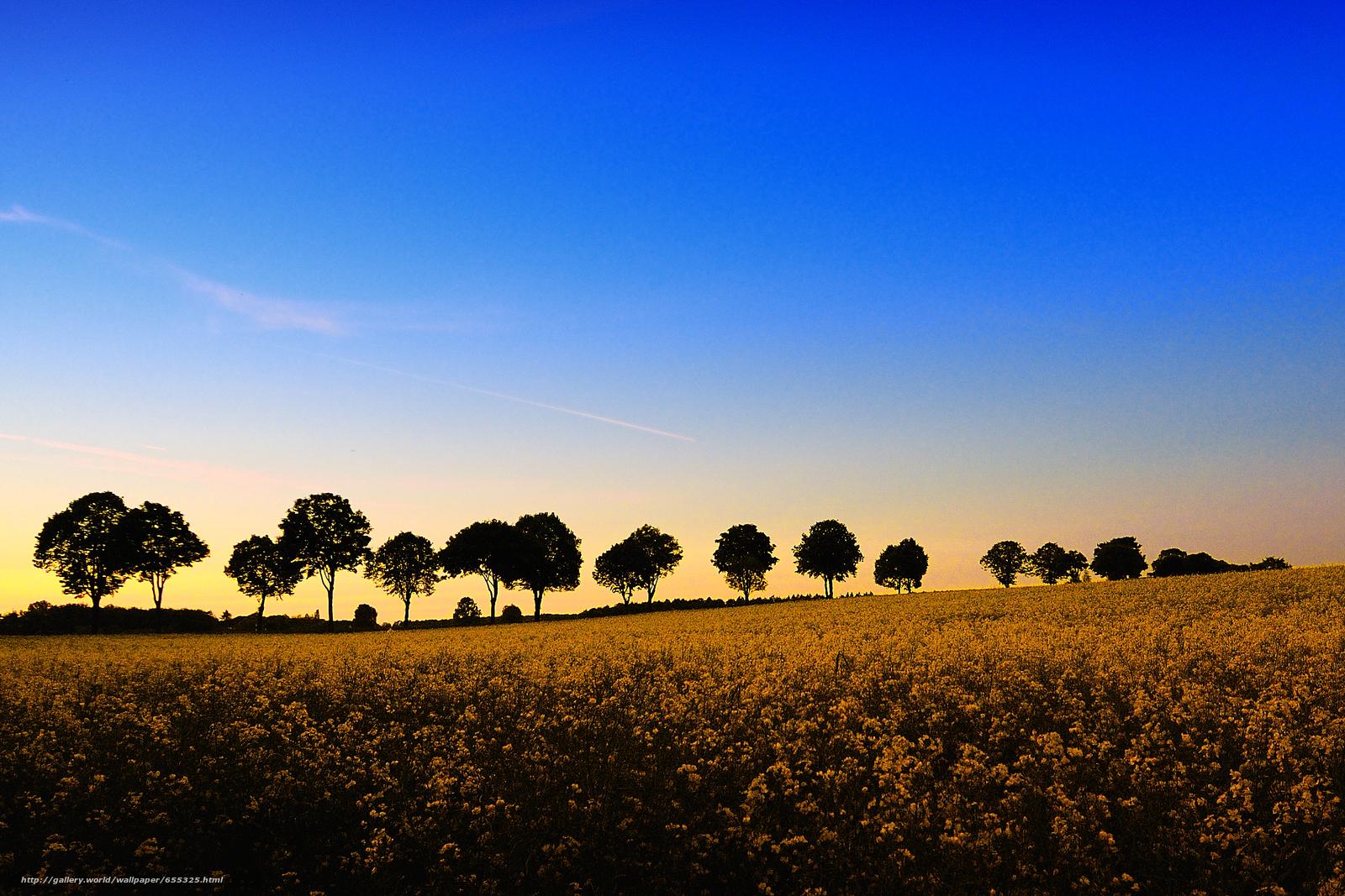 Descargar gratis puesta del sol,  campo,  Flores,  árboles Fondos de escritorio en la resolucin 2325x1550 — imagen №655325