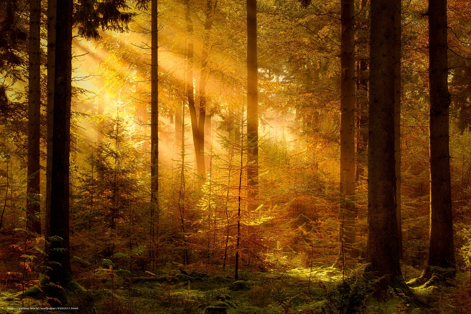 Download wallpaper forest,  trees,  RAYS OF THE SUN,  nature free desktop wallpaper in the resolution 1920x1280 — picture №655327